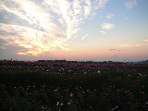 富士山と花畑と雲
